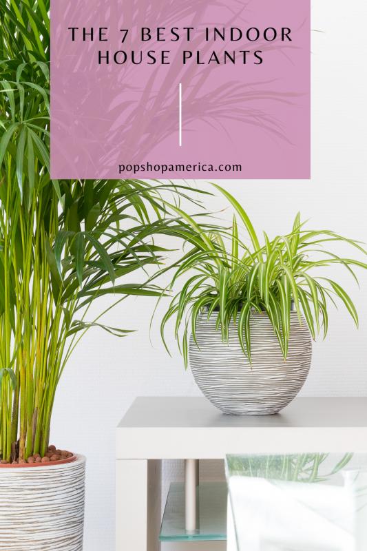 7 Best INdoor House Plants