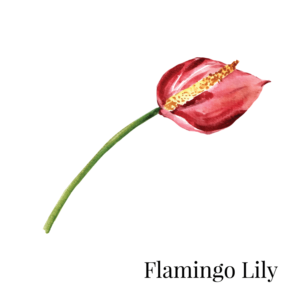 Flamingo Lily House Plant 1