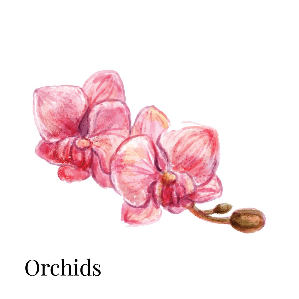 Orchids as Indoor House Plant 1