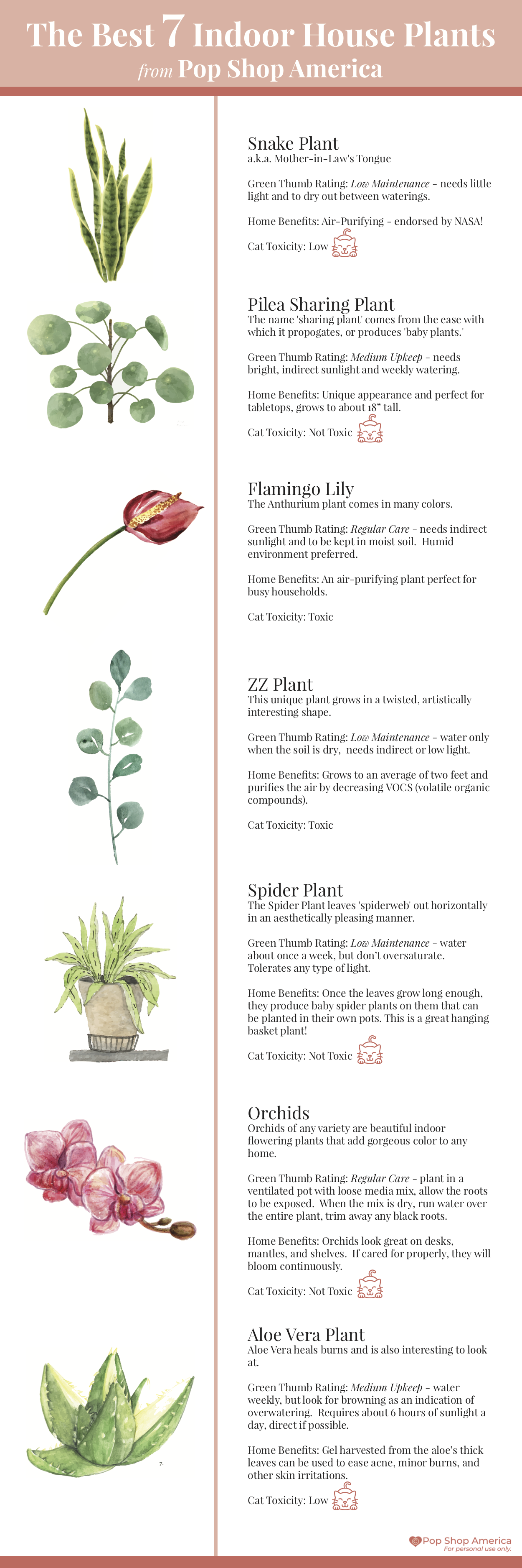The Best House Plants Infographic Pop Shop America