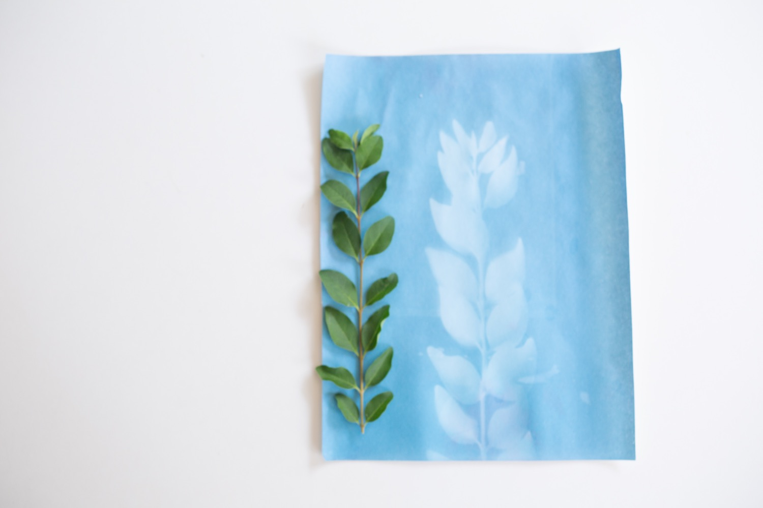 cyanotypes same day after drying photo print tutorial