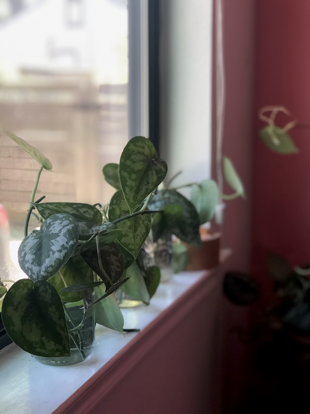 plant-propagation-leaf-cutting-jars-window-display