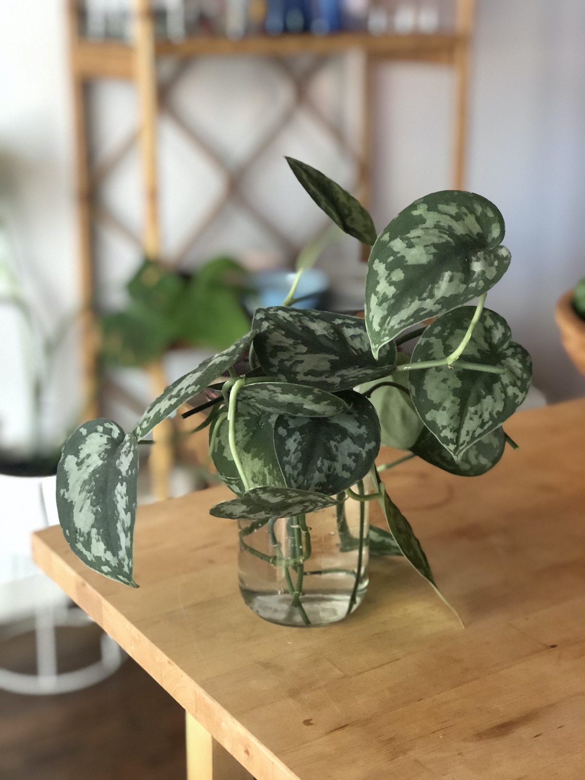 plant-propagation-leaf-cuttings-in-jar