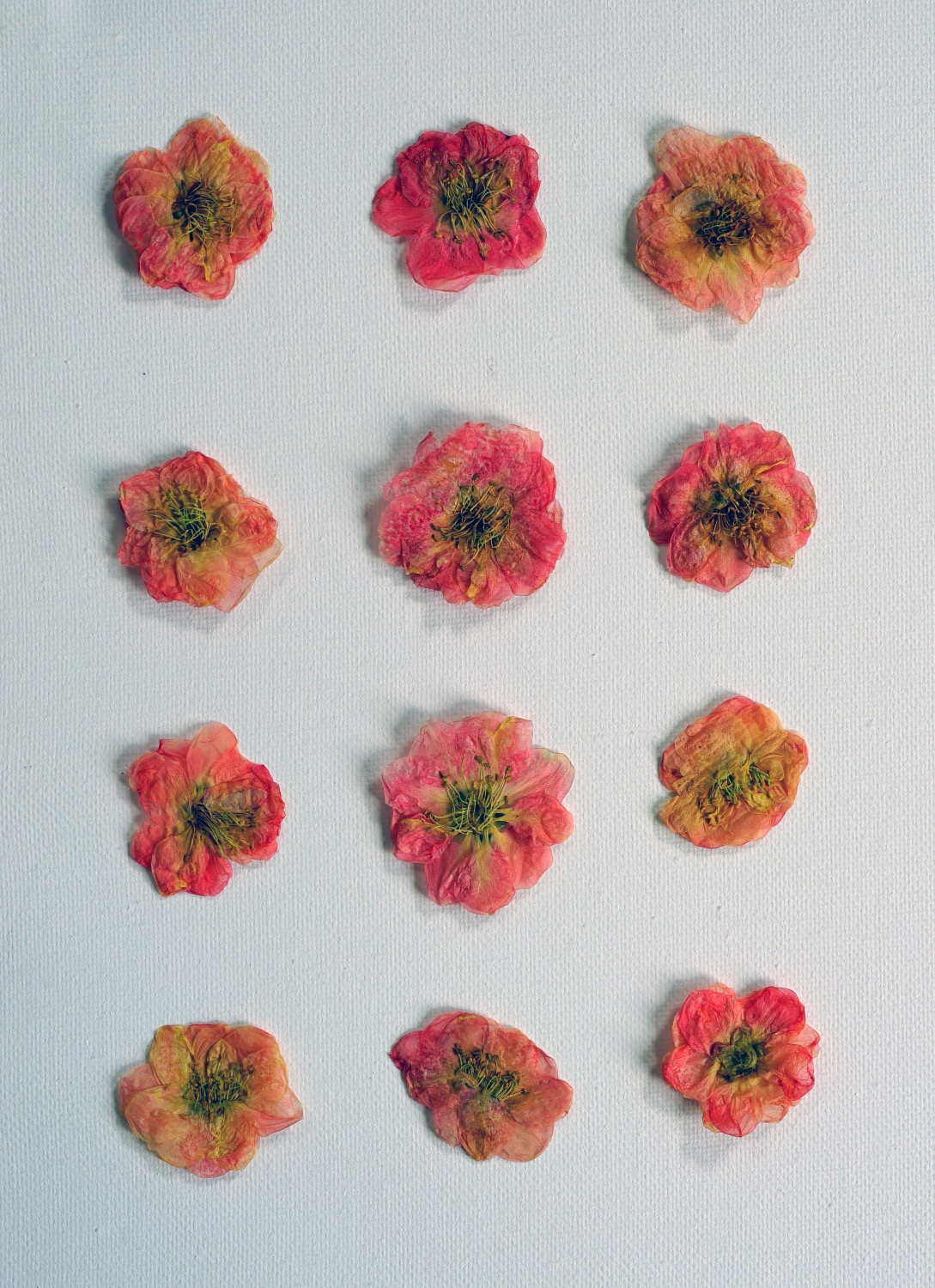 how to make diy pressed flowers pop shop america