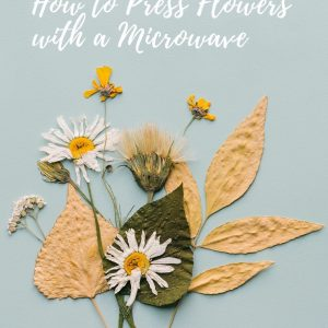 how-to-make-pressed-flowers-with-a-microwave-diy-pop-shop-america