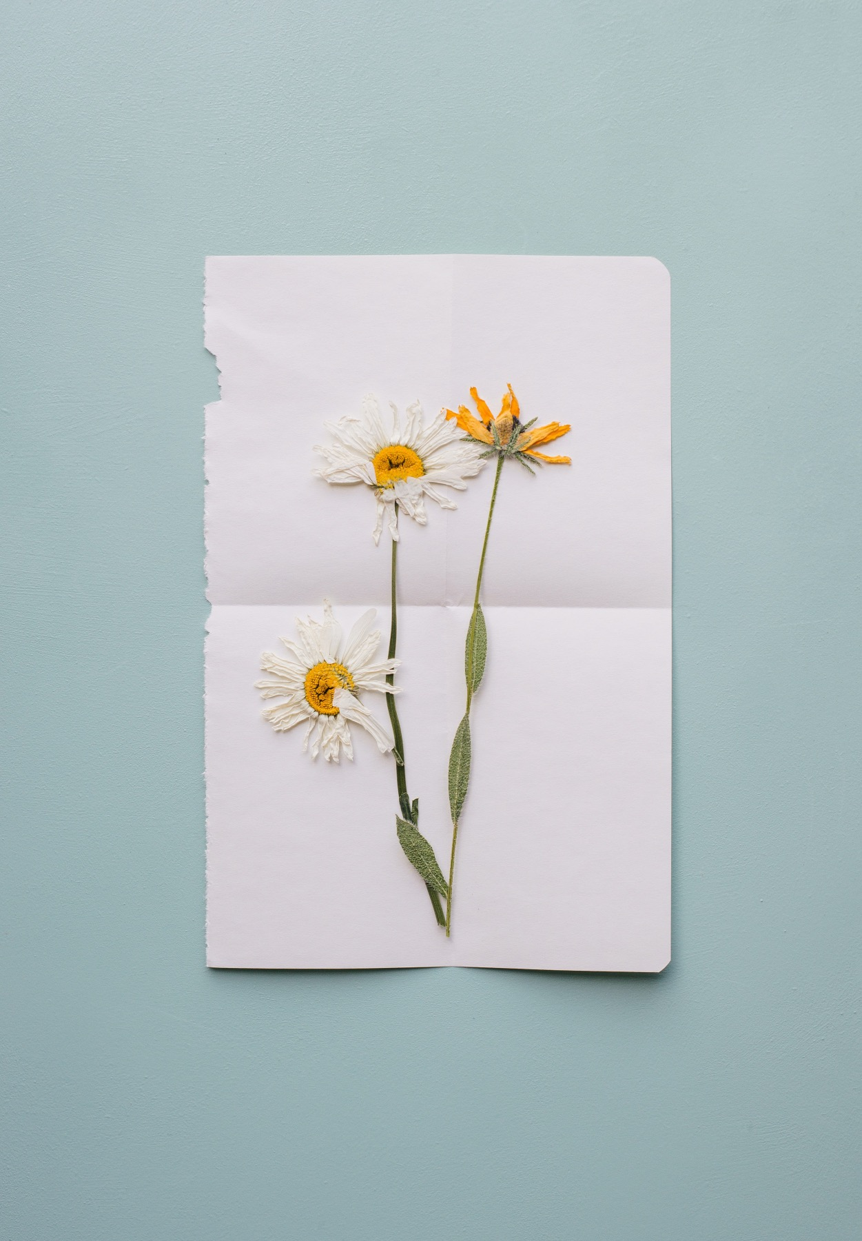 how to press flowers - with paper tutorial