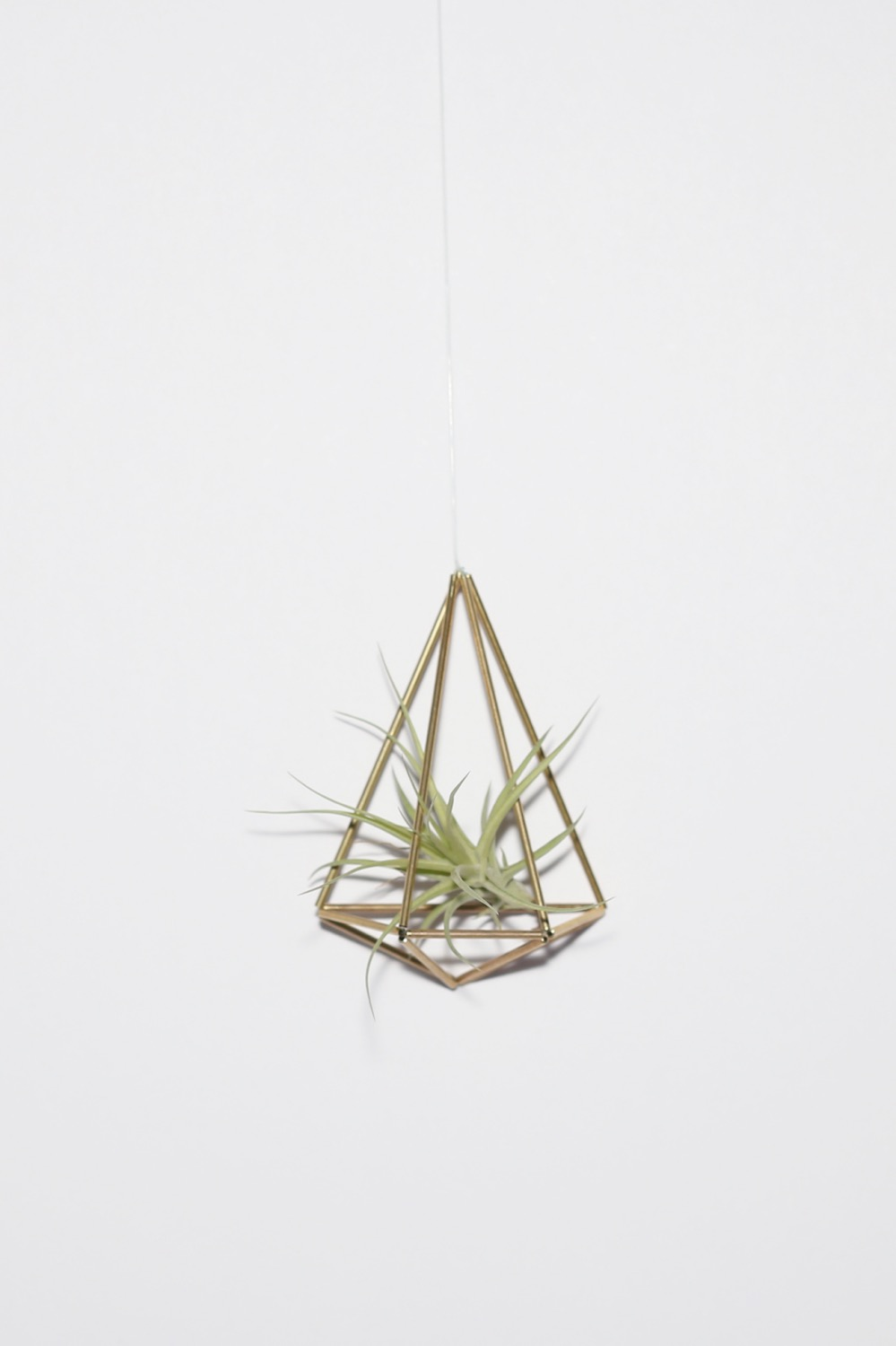 finished wall sconce with air plant diy tutorial