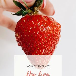 how to extract dna from strawberries