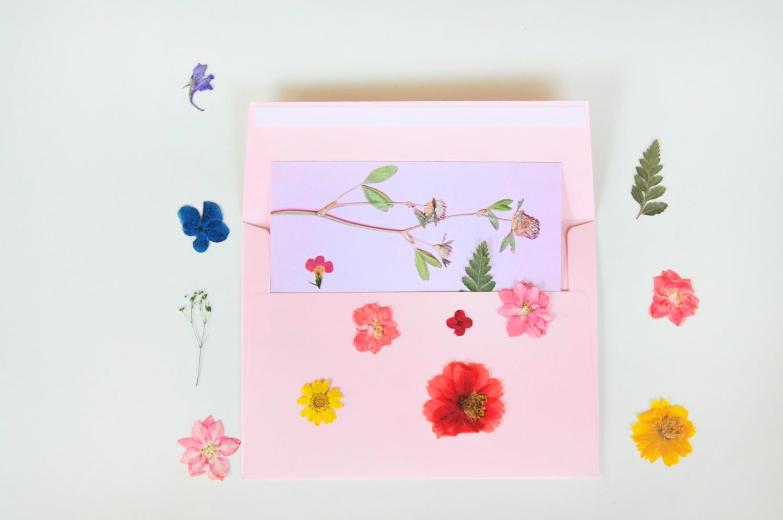 pressed flower postcard from pop shop america