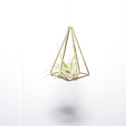 diy-single-air-plant-himmeli_square