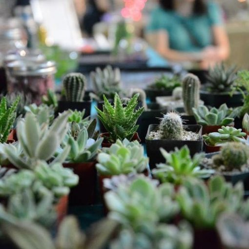 potted-small-succulents_square