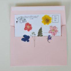 rainbow flower pressed postcard pack diy