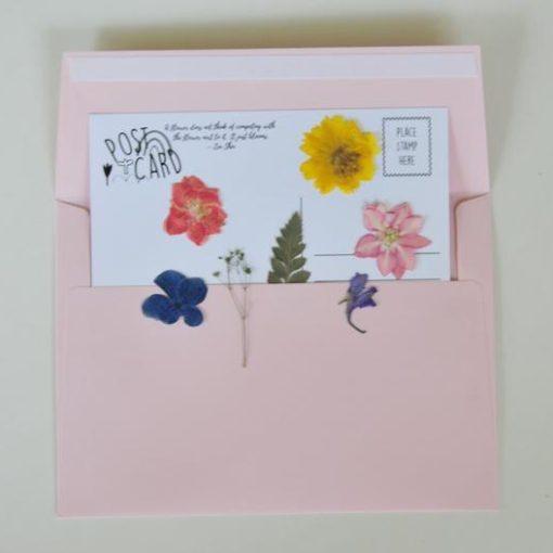 rainbow-flower-pressed-postcard-pack-diy_square
