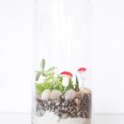diy tall cylinder terrarium kit