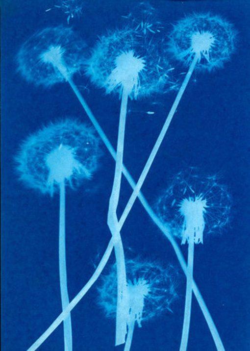 sunprint flower dandelion craft kit