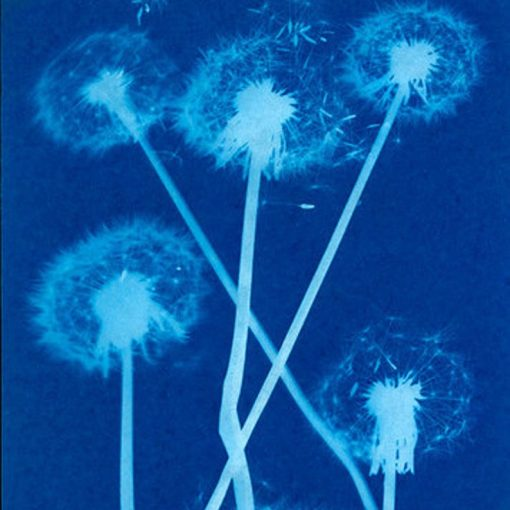 sunprint-flower-dandelion-craft-kit_square