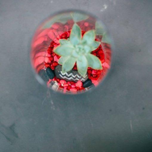 top-view-diy-gardening-terrarium-kit_square