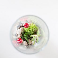 top view diy succulents terrarium kit