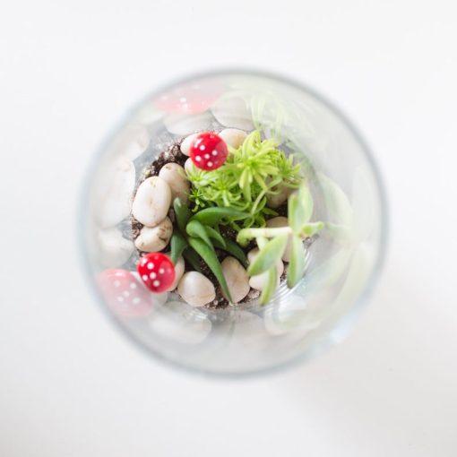 top-view-diy-succulents-terrarium-kit_square