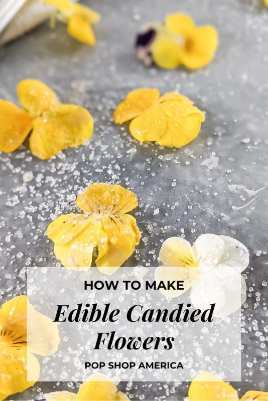how to make candied flowers pop shop america