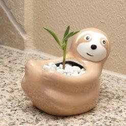 sloth planter gardening kit