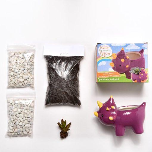 supplies in dinosaur terrarium kit