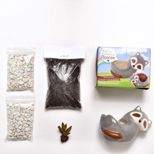 supplies in raccoon terrarium planter kit