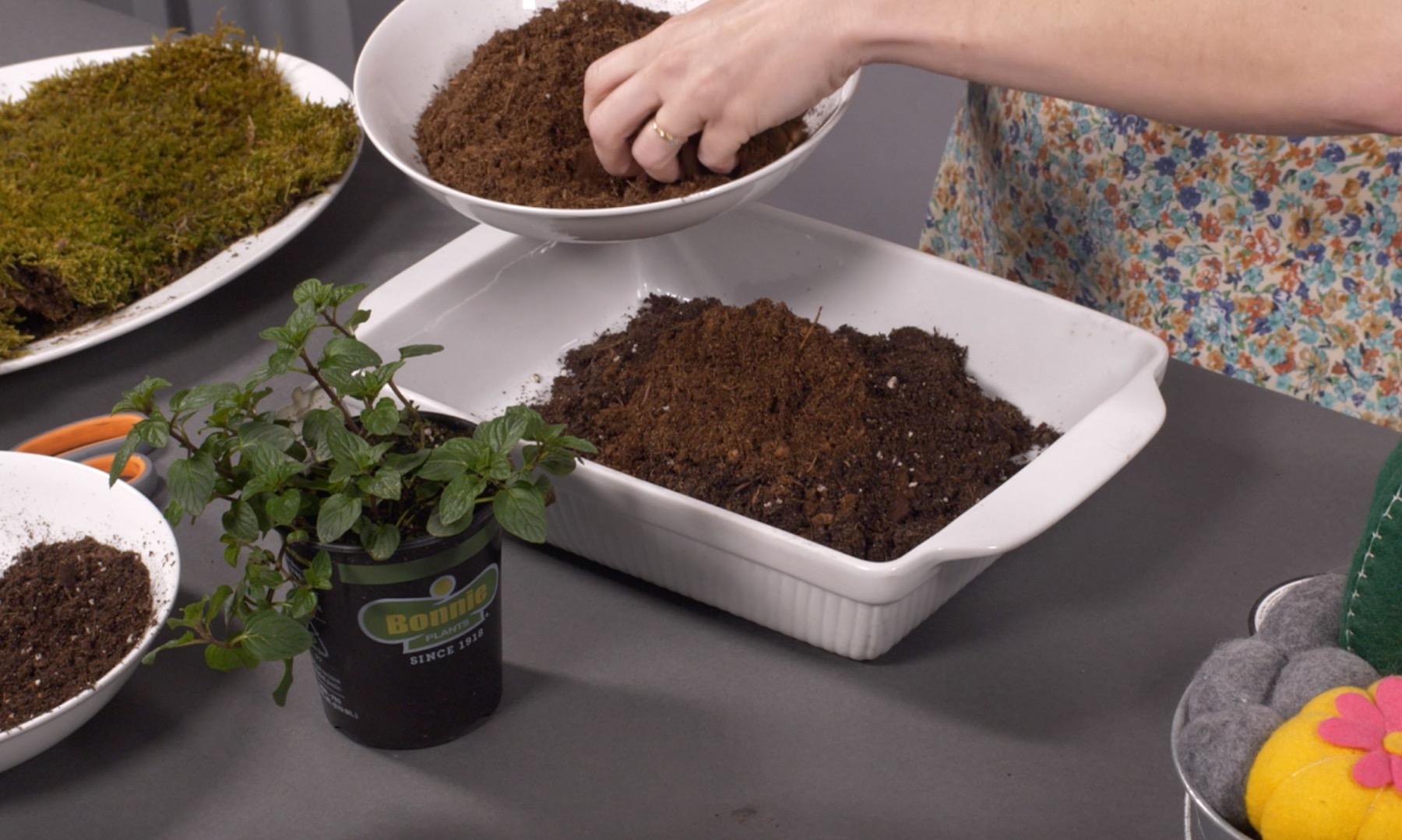 add peat moss to the bonsai soil for kokedamas
