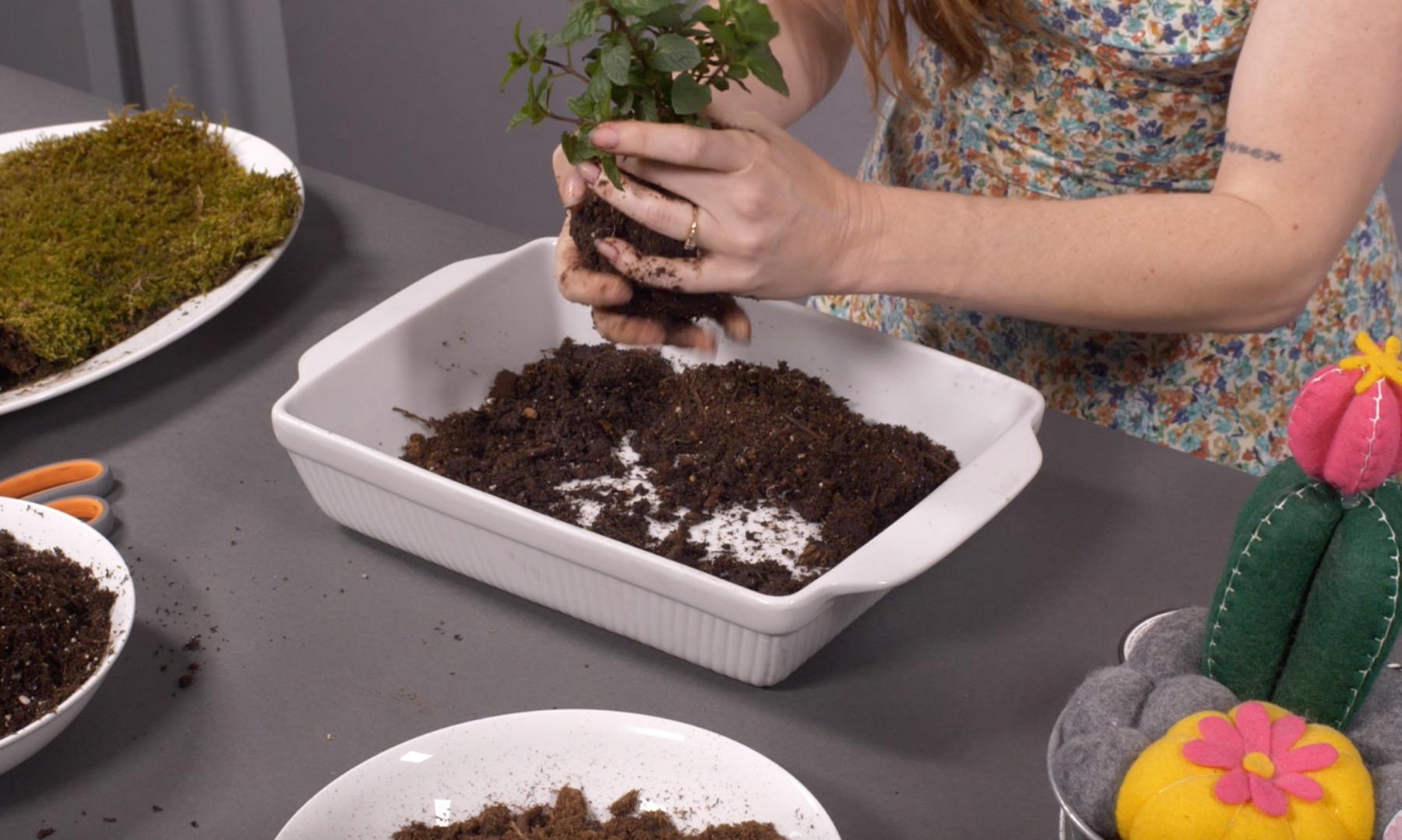 forming the mud ball around the plant kokedama tutorial
