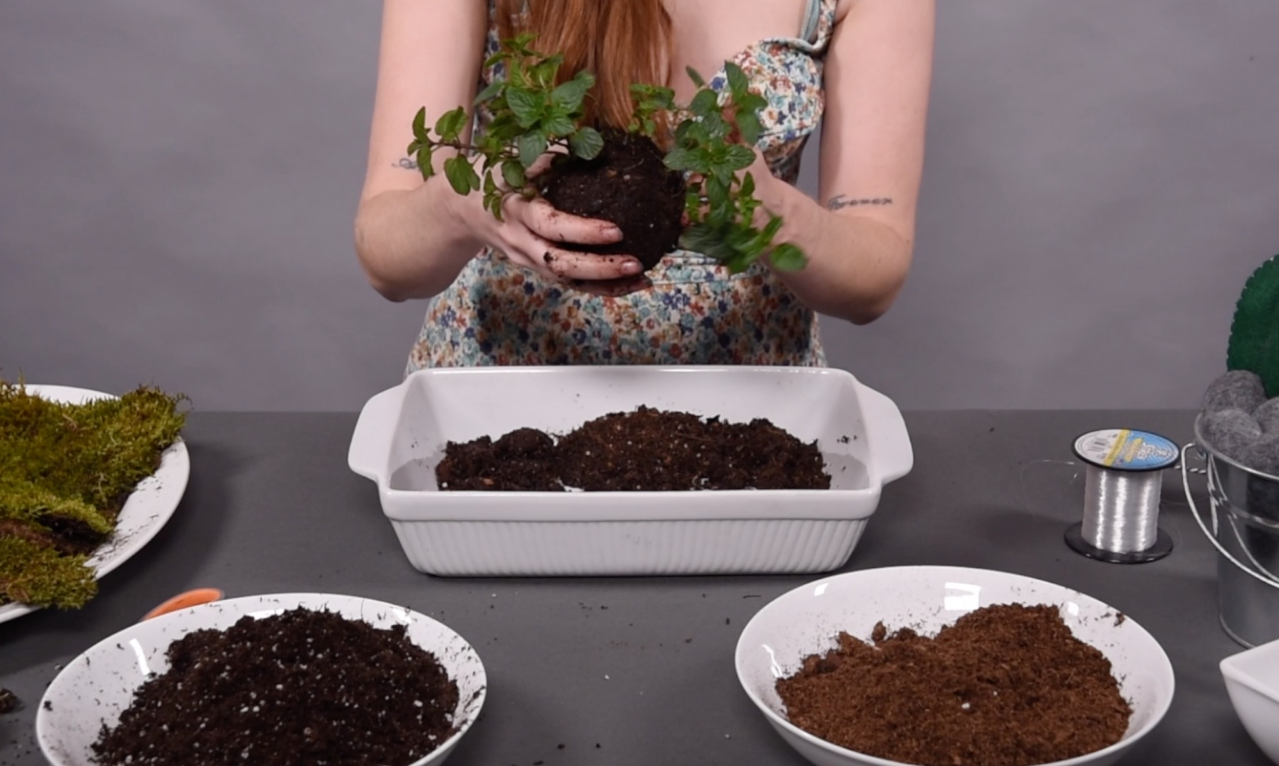 kokedama plant inside the mud ball ready for moss