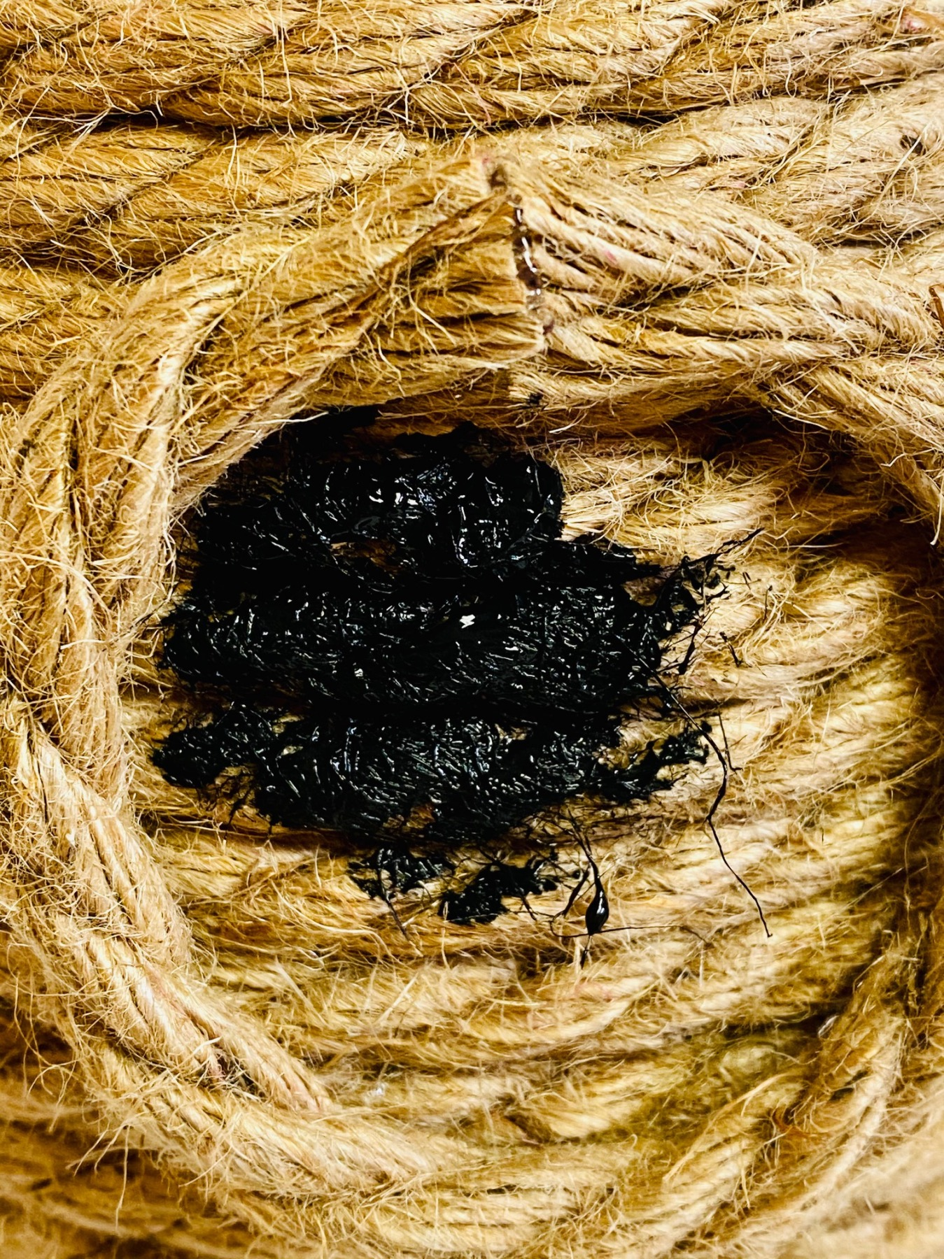 paint inside the rope circle to make an opening to the beehive