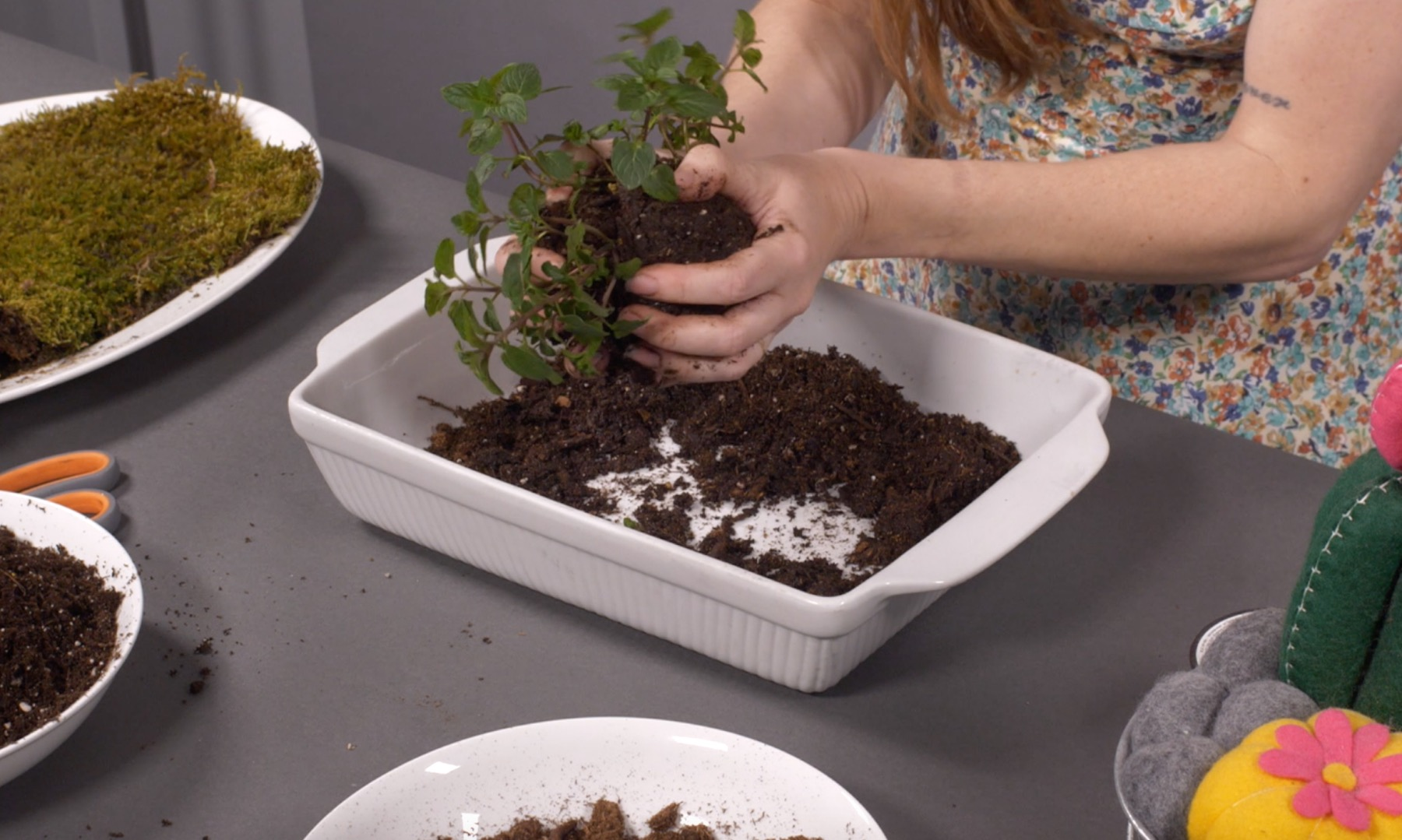 squeeze the mud ball together with the plant inside