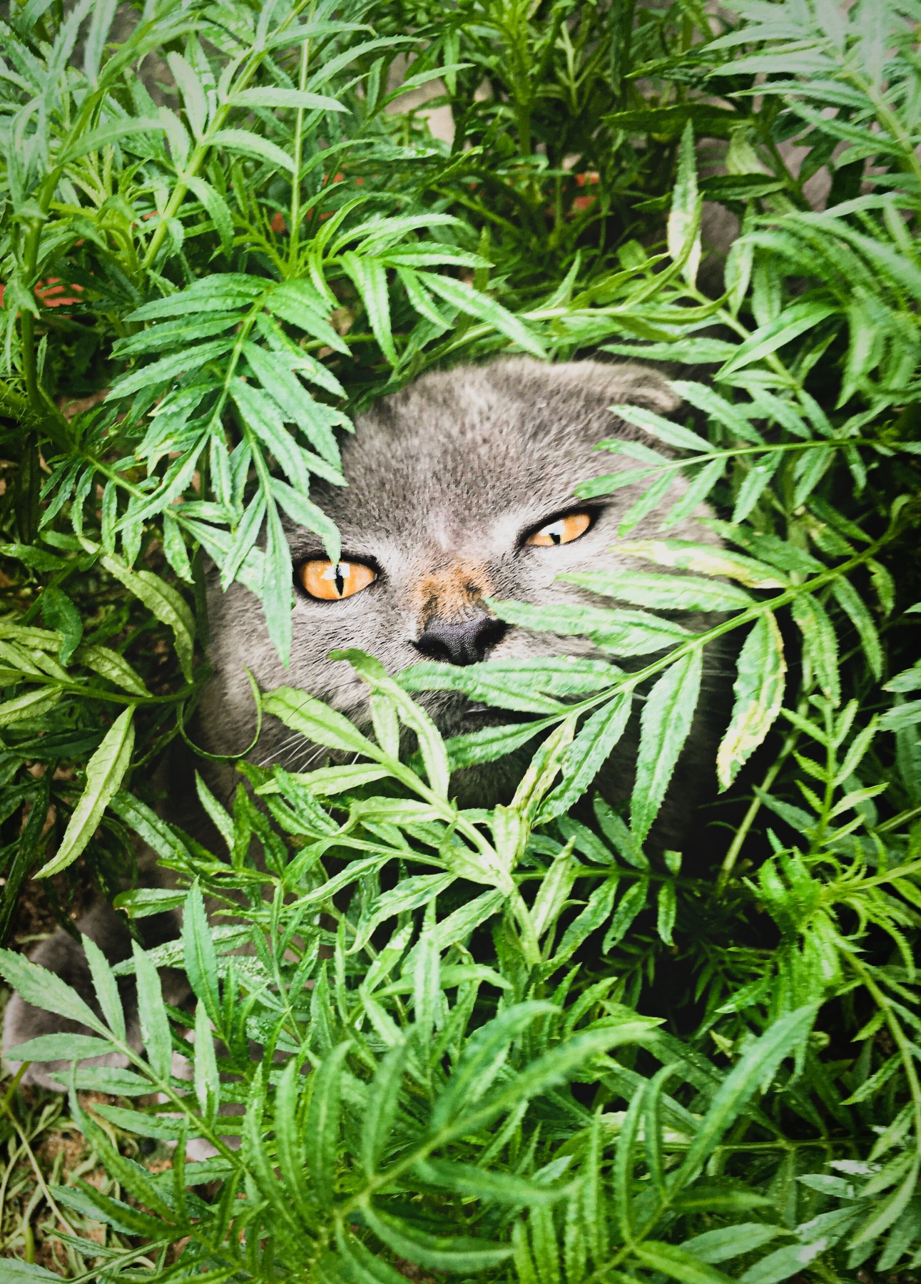 are ferns safe for cats and dogs gardening tutorial