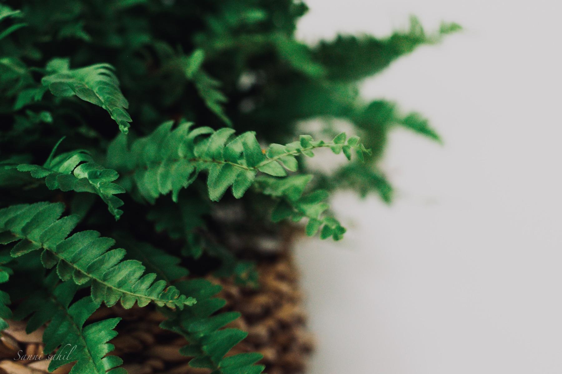 close up how to care for ferns tutorial pop shop america