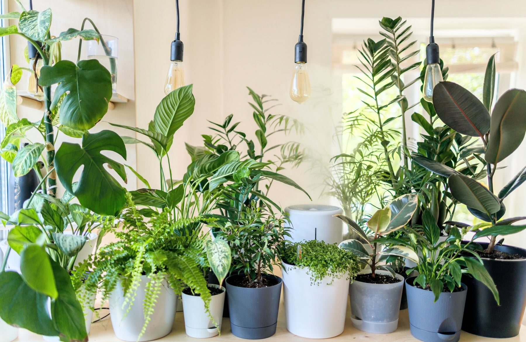 ferns and other house plants gardening care guide