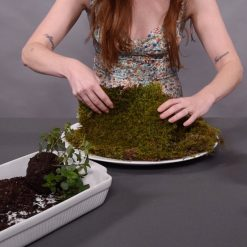 flip your reindeer moss to face the green side out square