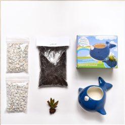 supplies inside diy narwhal gardening kit