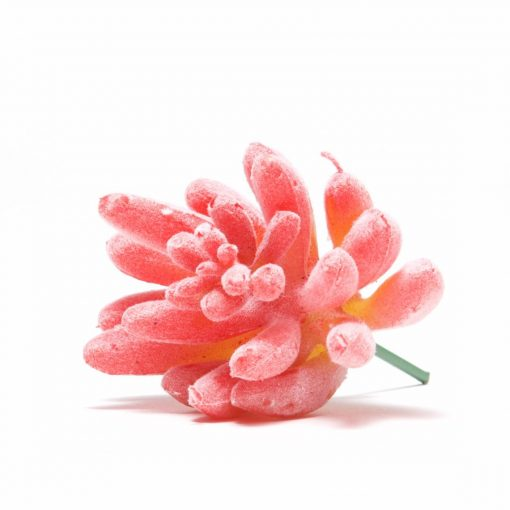 pink faux succulents